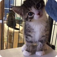 Adopt A Pet :: Addie - Camden, DE