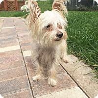 Adopt A Pet :: Juno - Boca Raton, FL