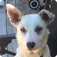 Adopt A Pet :: Jewel - Minneapolis, MN
