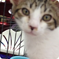 Adopt A Pet :: Buzz - Redondo Beach, CA