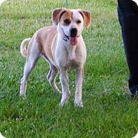 Adopt A Pet :: Petunia NEW VIDEO - Holly Hill, SC