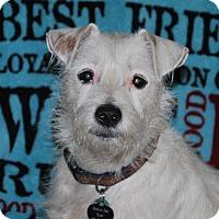 Adopt A Pet :: Alix - San Francisco, CA