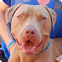 Adopt A Pet :: Tex - Las Vegas, NV
