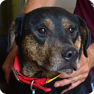 Shepherd (Unknown Type) Mix Dog for adoption in Tulsa, Oklahoma - Rocky