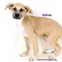 Adopt A Pet :: Belinda - Needs Foster - Bloomington, MN