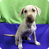 Adopt A Pet :: Minty-Adopted! - Detroit, MI