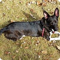 Adopt A Pet :: Bella - Huntsville, AL