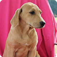 Adopt A Pet :: Leila (has been adopted) - Albany, NY