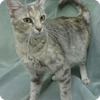 Adopt A Pet :: Wanda - Olive Branch, MS