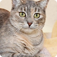 Adopt A Pet :: Candy Apple - Encinitas, CA