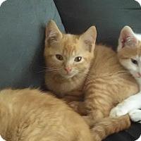 Adopt A Pet :: Oakley - Millersville, MD