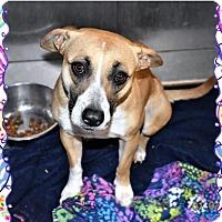 Adopt A Pet :: Casey - San Jacinto, CA
