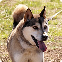 Adopt A Pet :: Zuke - Maynardville, TN