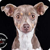 Adopt A Pet :: Rosa-Lee - Lodi, CA