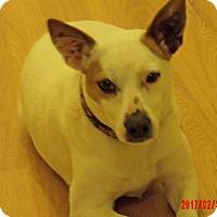 Adopt A Pet :: Angel (17 lb) Close To Perfect - Burlington, VT