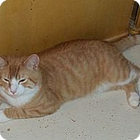 Adopt A Pet :: Sundance Kid - Catasauqua, PA