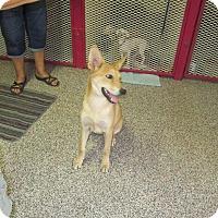 Adopt A Pet :: Mojave (located in Mesa AZ) - Cranston, RI