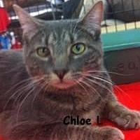 Adopt A Pet :: Chloe L - Sacramento, CA