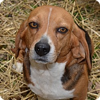 Adopt A Pet :: Gracie - Westfield, IN
