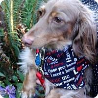 Adopt A Pet :: TACO - Portland, OR
