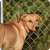 Adopt A Pet :: Murphy - Charlemont, MA