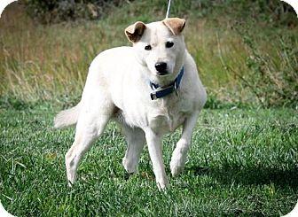 Labrador Retriever Mix Dog for adoption in Dublin, Virginia - Paris