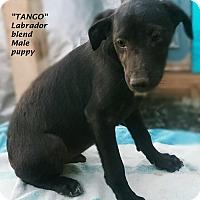 Adopt A Pet :: Tango, Mambo and Macarena - El Cajon, CA
