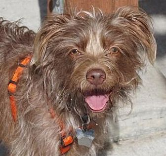 Terrier (Unknown Type, Medium) Mix Dog for adoption in Pt. Richmond, California - HENRY