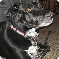 Adopt A Pet :: Meka - Ogden, UT