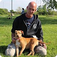 Adopt A Pet :: Halo - Elyria, OH