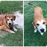 Adopt A Pet :: Toby - Longview, TX