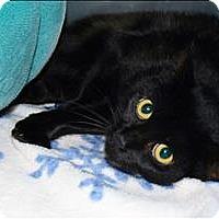 Adopt A Pet :: Angie - San Luis Obispo, CA