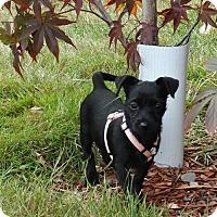 Adopt A Pet :: Magdalena - Tacoma, WA