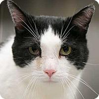 Adopt A Pet :: Barley - Toronto, ON