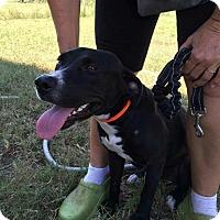 Adopt A Pet :: Leah - CASCADE, WI