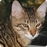 Adopt A Pet :: Lister - North Highlands, CA