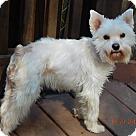 Adopt A Pet :: Sophia (10 lb) Perfect Girl!