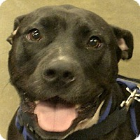 Adopt A Pet :: Lucy - Newnan, GA