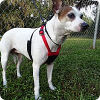 Adopt A Pet :: MINNIE - Brooksville, FL