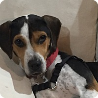 Adopt A Pet :: Randy - Santa Rosa, CA