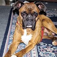Adopt A Pet :: Rusty - Boise, ID