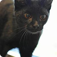 Adopt A Pet :: Rollo - Aiken, SC