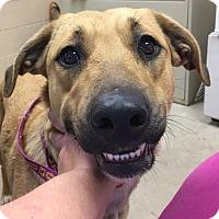 Adopt A Pet :: Samara - available 1/22 - Sparta, NJ