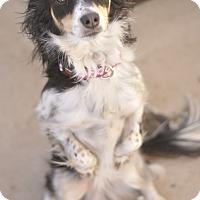 Adopt A Pet :: Camille - Las Vegas, NV