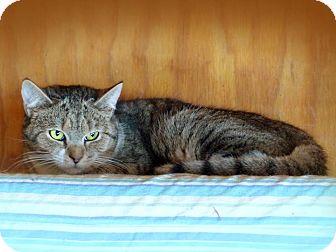 Domestic Shorthair Kitten for adoption in Monterey, Virginia - Joanie $35 adoption