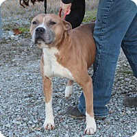 Adopt A Pet :: Jameson WILL DIE 2-20-17 - Columbia, TN