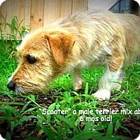Adopt A Pet :: Scooter - Gadsden, AL