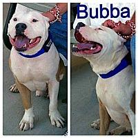 Adopt A Pet :: Bubba - Snellville, GA