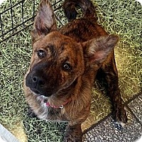 Adopt A Pet :: Emmy Lou - Costa Mesa, CA