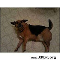 Adopt A Pet :: Ramone - Norman, OK